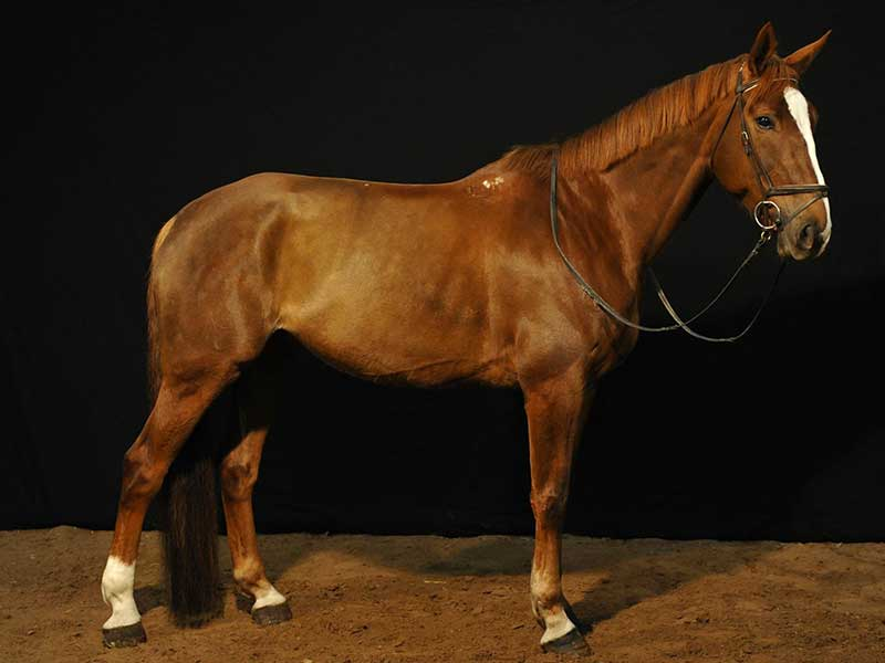cheval-taloubet-01.jpg