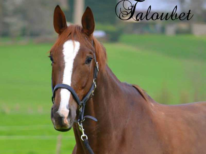 cheval-taloubet-02.jpg