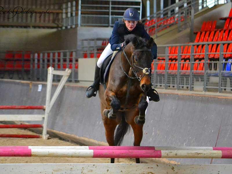 Cours equitation gros chêne cheval