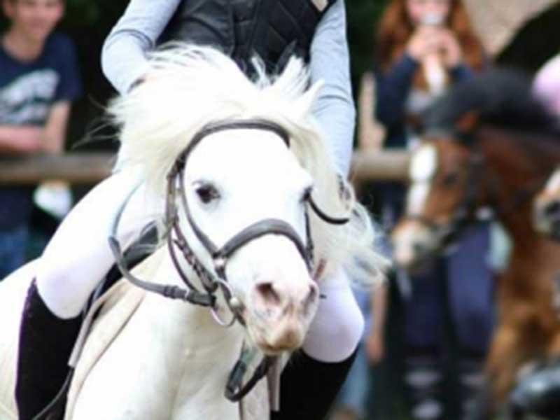 kaline poney école d'équitation gros chêne bousbecque