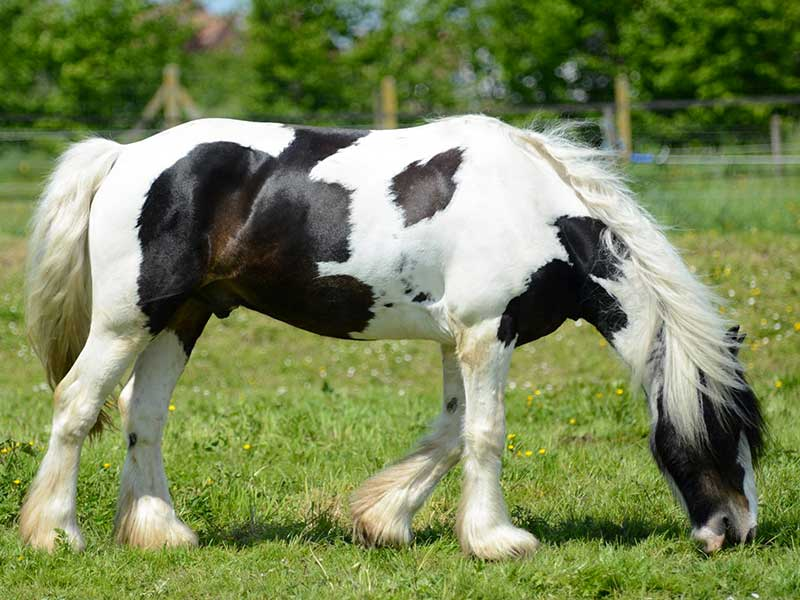 double-poney-loustic-02.jpg