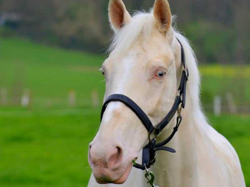 cheval-manolo-01.jpg