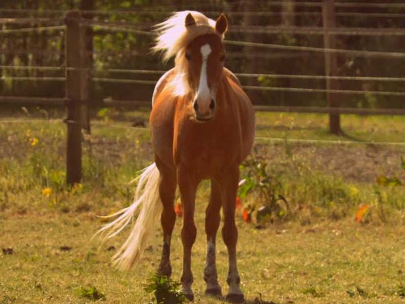 poney-spirit-01.jpg