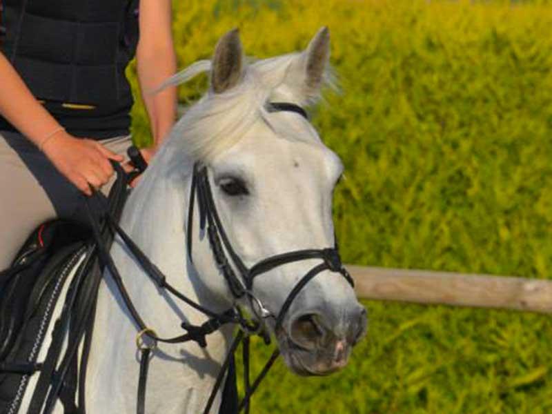 cheval-what-boy.jpg